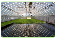 aquaponics system for commercial farms