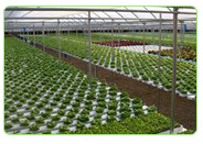 aquaponics system commercial farms