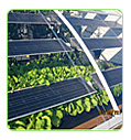 commercical greenhouse solar