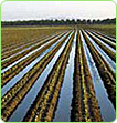 furrow irrigation system solar powered